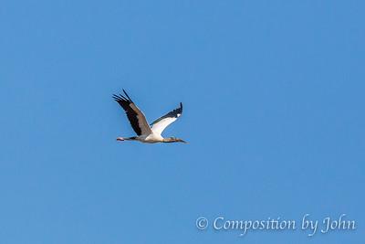 Everglades National Park, FL