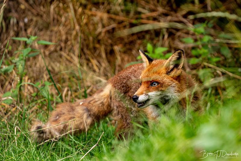 British Wildlife Centre_D850-0030.jpg