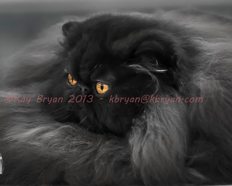 CatShow2014135.jpg
