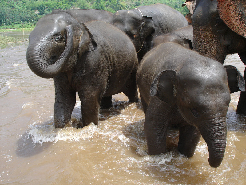 Chiang-Mai-attractions-baby-elephants.jpg