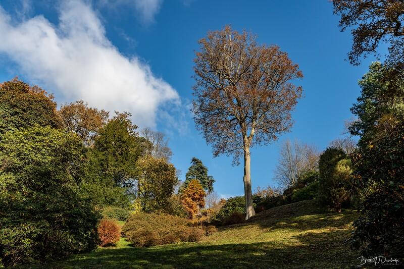 Wakehurst_Autumn-6103.jpg