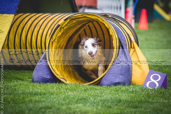 NADAC Western Regional Dog Agility Trials 2018