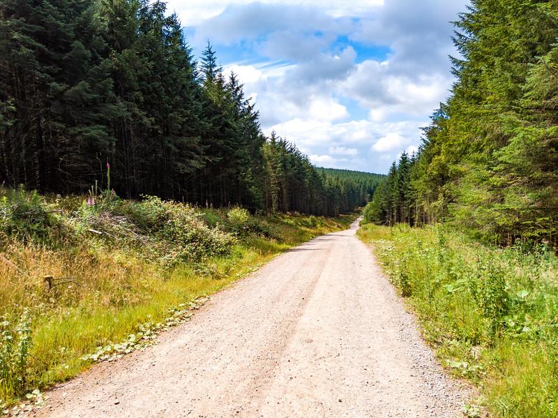 20190727-1200-Afan Forest Trail Marathon-0006.jpg