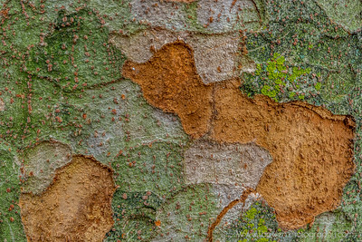 Textures in Nature.