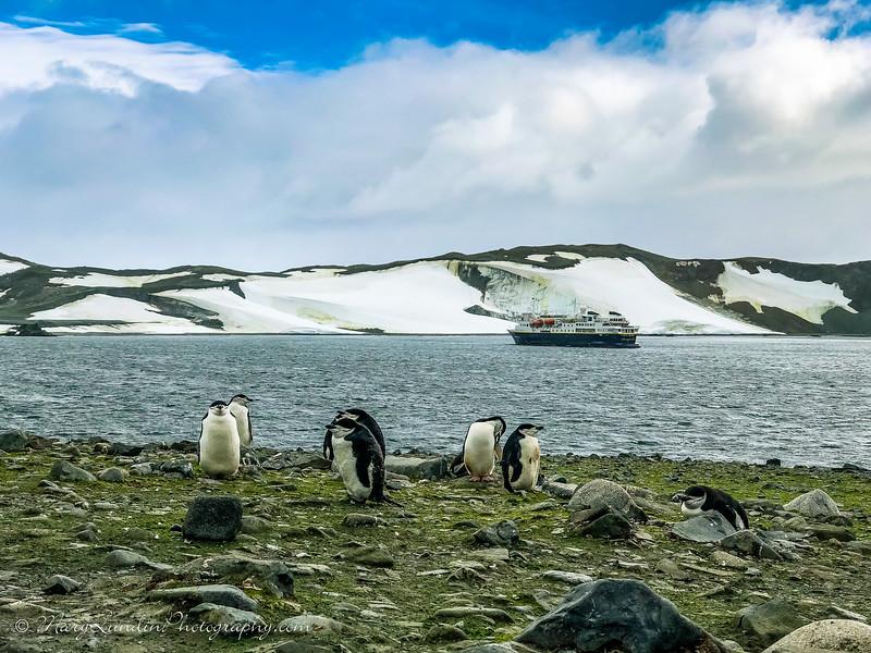Antarctic-64