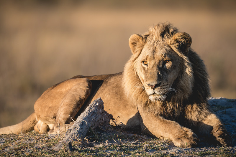 Botswana_June_2017 (1406 of 6179).jpg