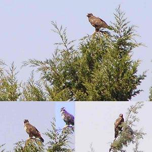 World Bird Life List [31]