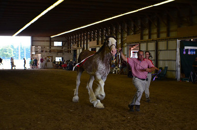 642 Grand Champion.Reserve Stallion