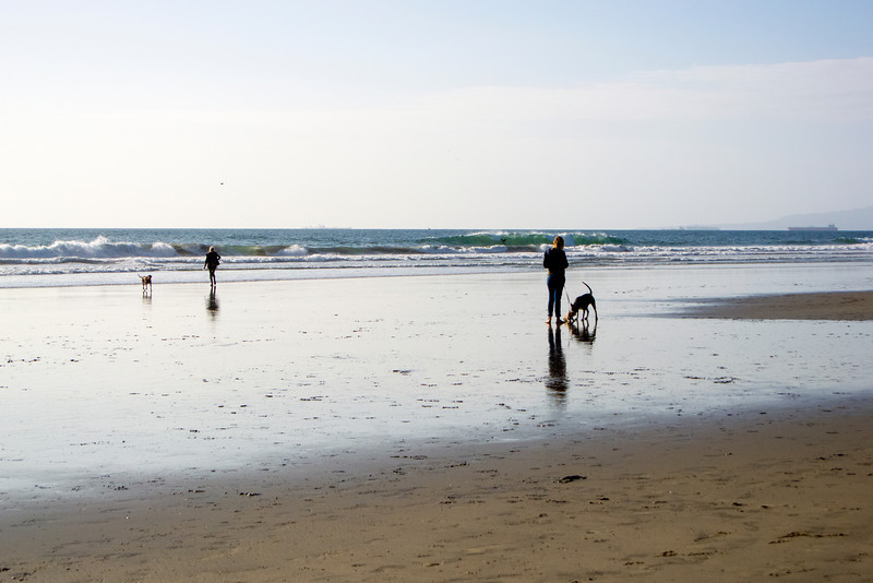 dogs_beach-7.jpg
