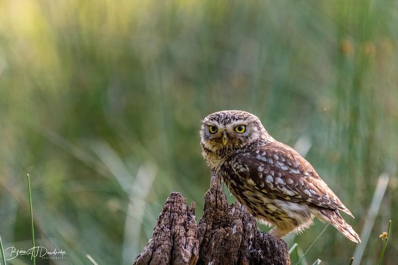 The Little Owl Shoot-6346.jpg