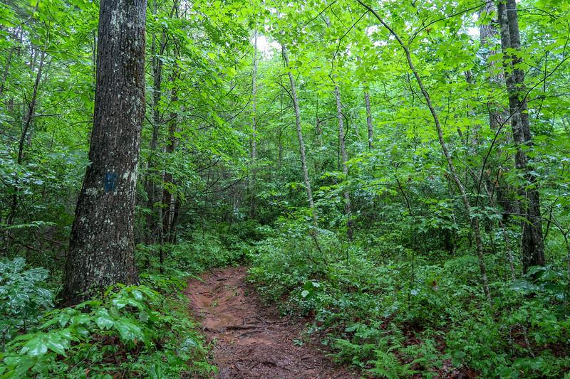 Barnett Branch Trail -- 3,350'