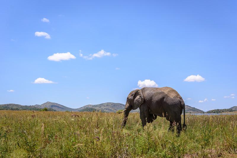 Pilanesberg-20130217-0338