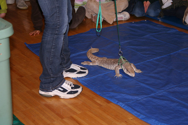 Roving Reptiles