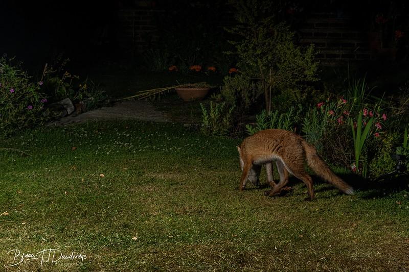 Garden Night Shoot-7269.jpg
