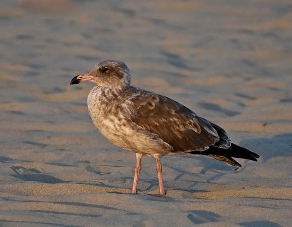 U.S. Bird Life List 2018 to 2019