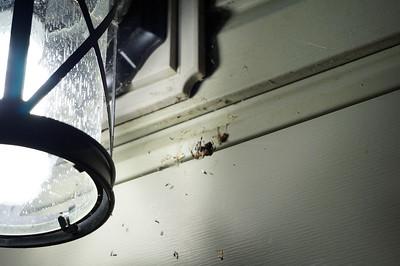 Spider/Katydid 20160810