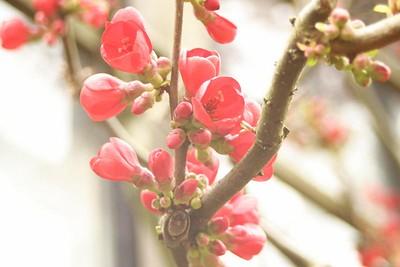 "Leiden - Botanical Garden ""Hortus Botanicus"""