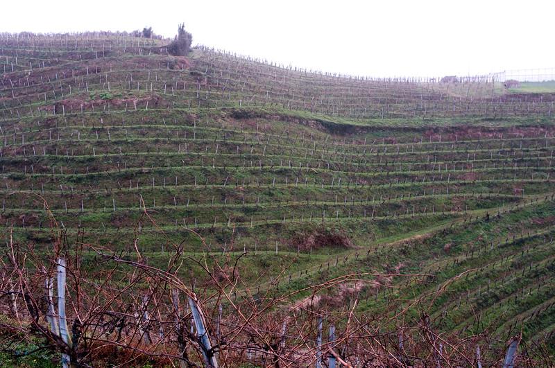 Poetic lines of Ameztoi's vineyards in D.O. Getariako Txakolina.