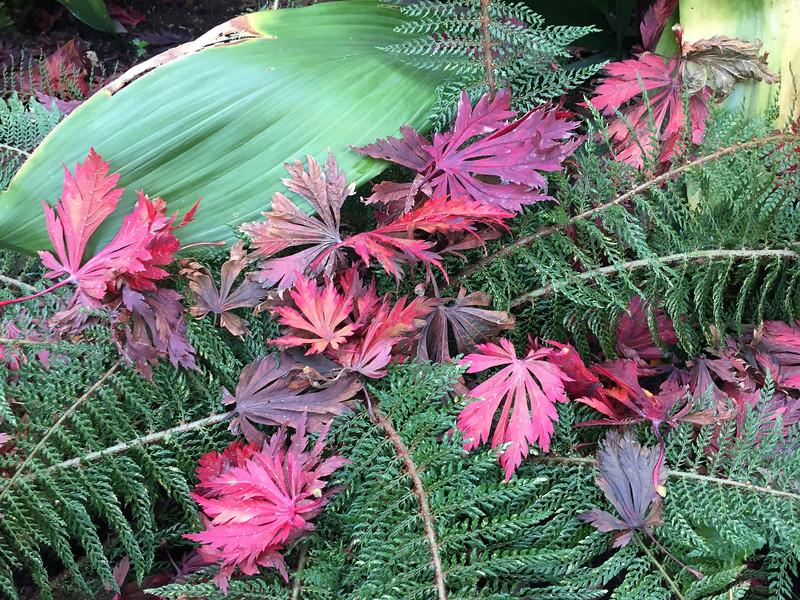 Fallen foliage on Ferns