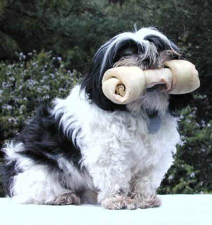 620_dogbone.jpg