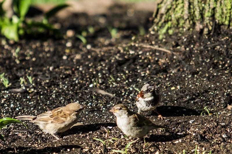 Birding_Rochester_061312_004.jpg