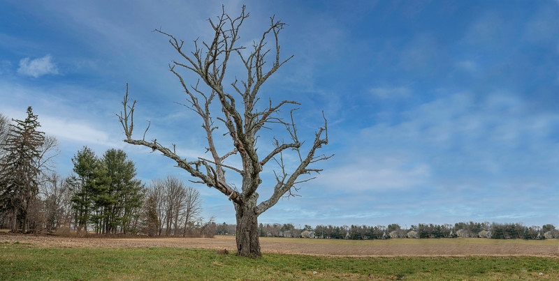 Tree 201.jpg