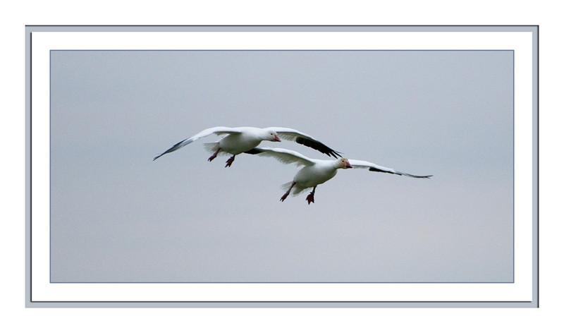 fir_island_00243_wingman_matted-sm.jpg
