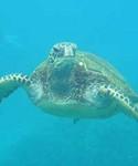 Prince Kuhio, Molokini and Turtle Town Snorkel