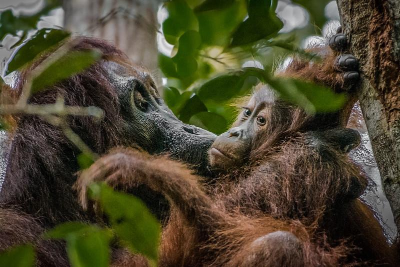 Borneo-2276.jpg