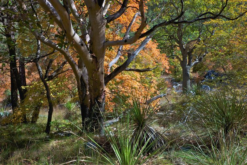 McKittrick Canyon 2010