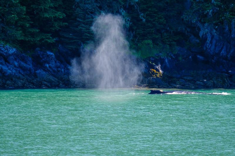 Alaska Cruise-9221.jpg