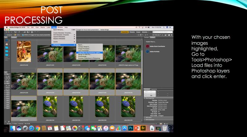 25 focus stack.jpg.png