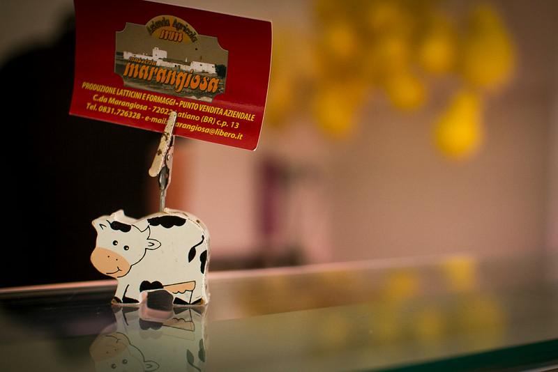 mangiosa cow.jpg