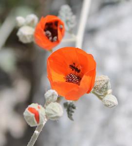Anza-Borrego Desert State Park - March 25-28, 2013