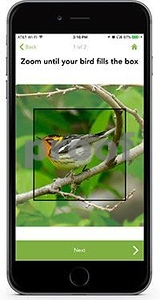 computer-vision-app-can-identify-north-american-bird-species-from-photographs