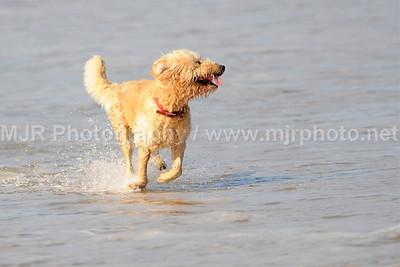 Montauk 2008, The Beach Scene, 08.27.08