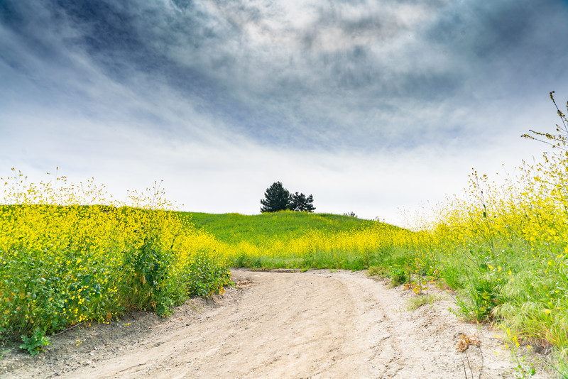 trail and trees-1.jpg