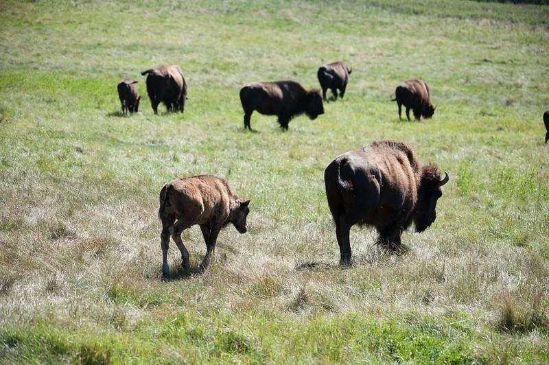 20160821_Custer State Park_08.jpg