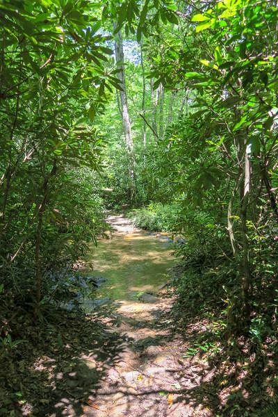 Fletcher Creek Trail -- 2,610'