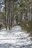 Snow Covered Path - Assateague