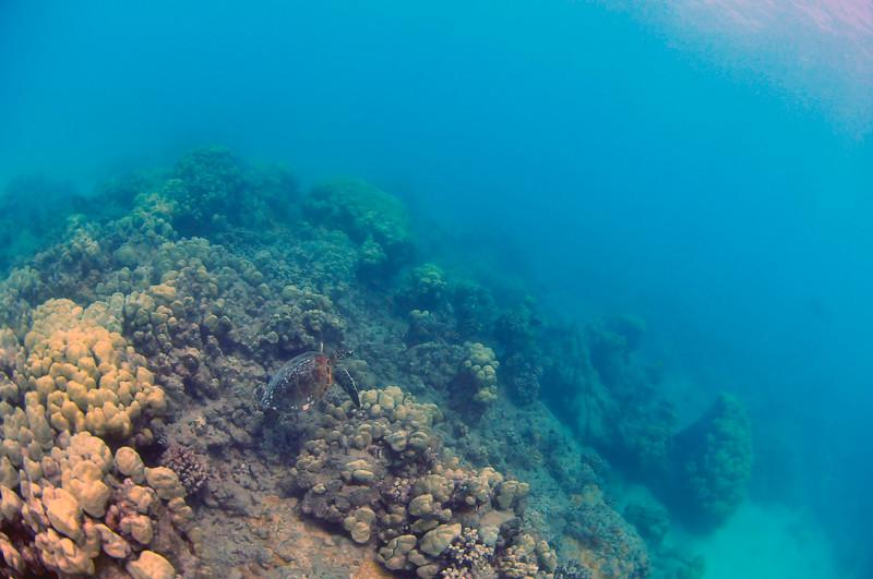 Hawaii - Hanauma Bay-40.JPG