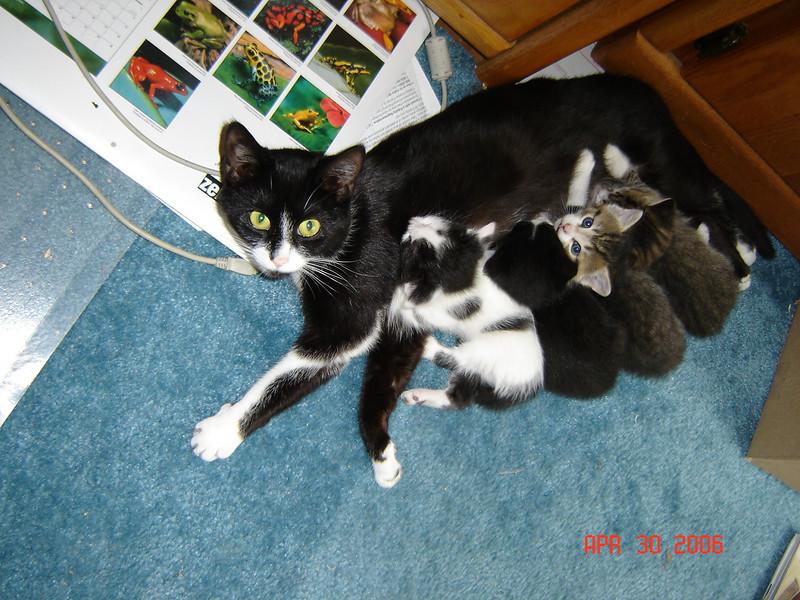 Bootys kittens 010.jpg