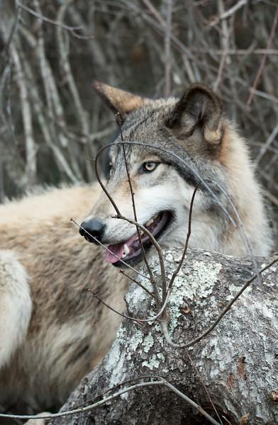 Seacrest Wolves_-65.jpg
