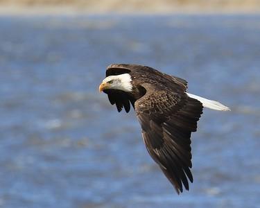 Klamath Falls eagle trip March  2018