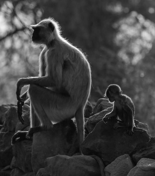 India_April_2019-2850.jpg