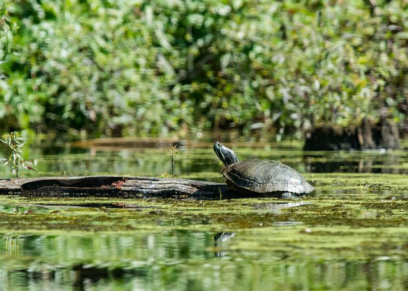 Monksville Reservoir Kayaking (181 of 206).jpg