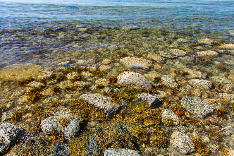 Maine-Acadia-shoreline-atcottage2.jpg