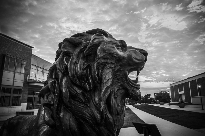 14-RSC Lion timelapse-2.jpg