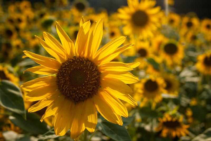 Gardens of Sunlight