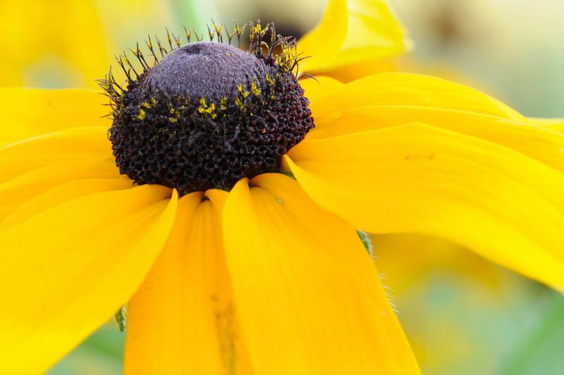 flowers_20080714-019.jpg